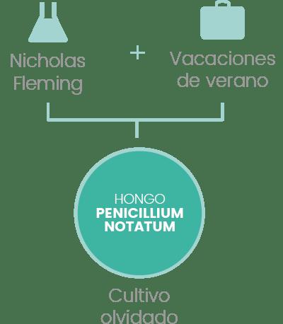 hongo penicillium notatum Penicilina infografía