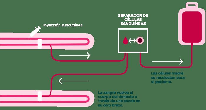 extraccion-sangre-periferica