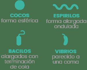 Tipos de bacterias. Infografía Penicilina